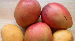 Mango, nezaobilazna voćka svakog čovjeka