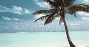palma na plaži