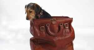 pas u torbi