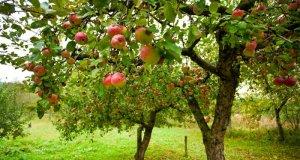 Zaštita bilja u ekološkoj proizvodnji