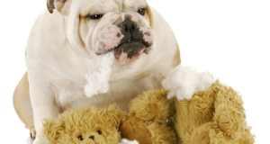 pas s igračkom