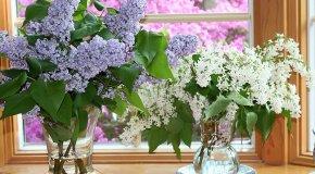 Cvijeće za vazu