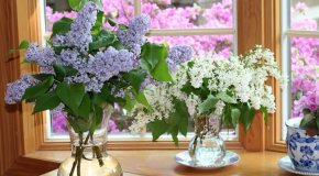 Kako napraviti buket cvijeća
