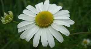 liječenje floriterapijom