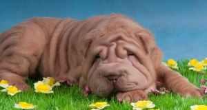 Zaštita pasa od krpelja