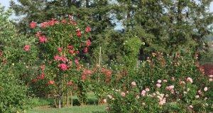 biljke za cvjetne gredice