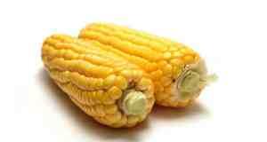 GMO hrana