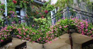 balkonsko-cvijece