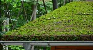 zeleni-krov