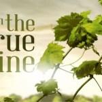The True Vine Savor Scripture