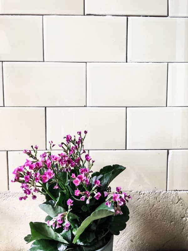 Pink flowers in front of subway tile.