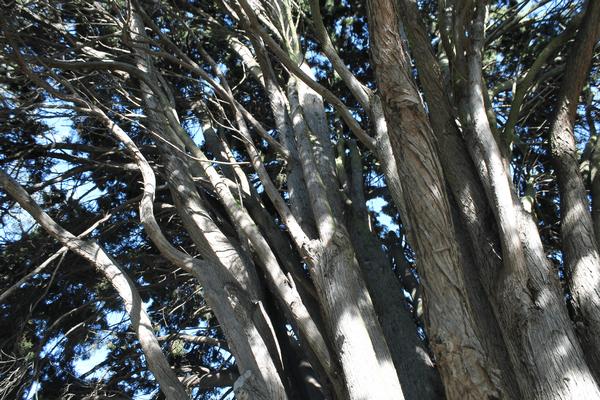 tasmanie hobart botanical garden