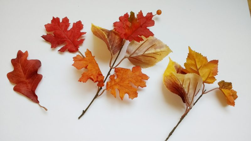 Individual Fall Leaves
