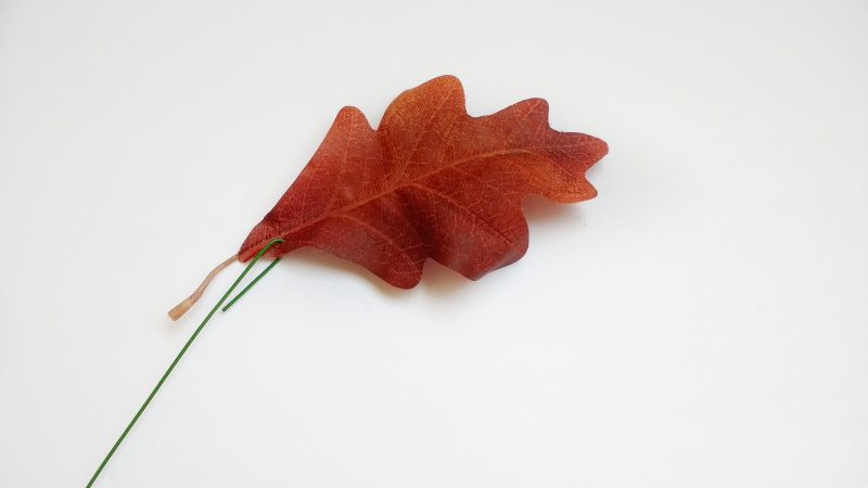 Leaf with Wire