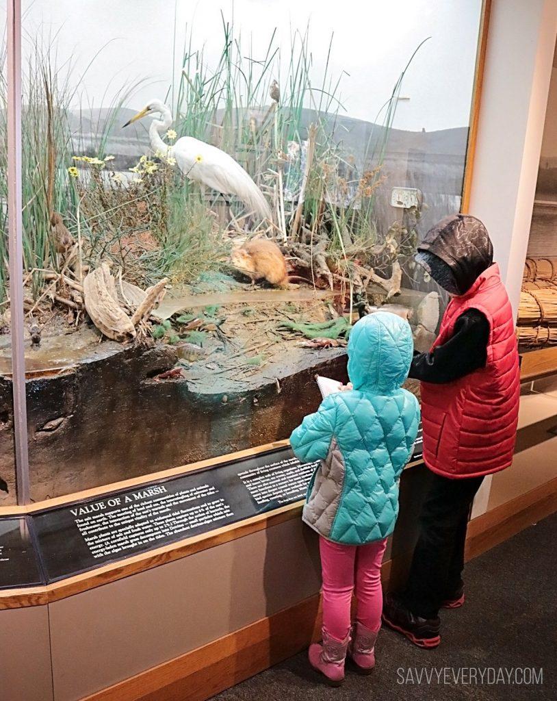 Kids looking at marshland inhabitants exhibit