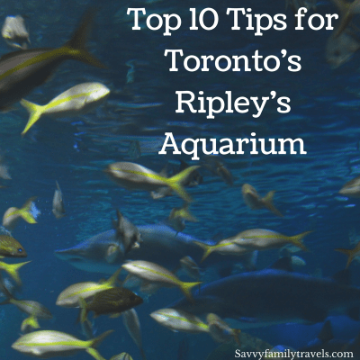 Top 10 Tips for Toronto's Ripley's Aquarium