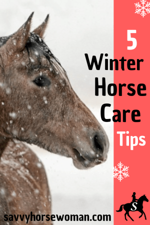 Horses in Winter - 5 Helpful Care Tips