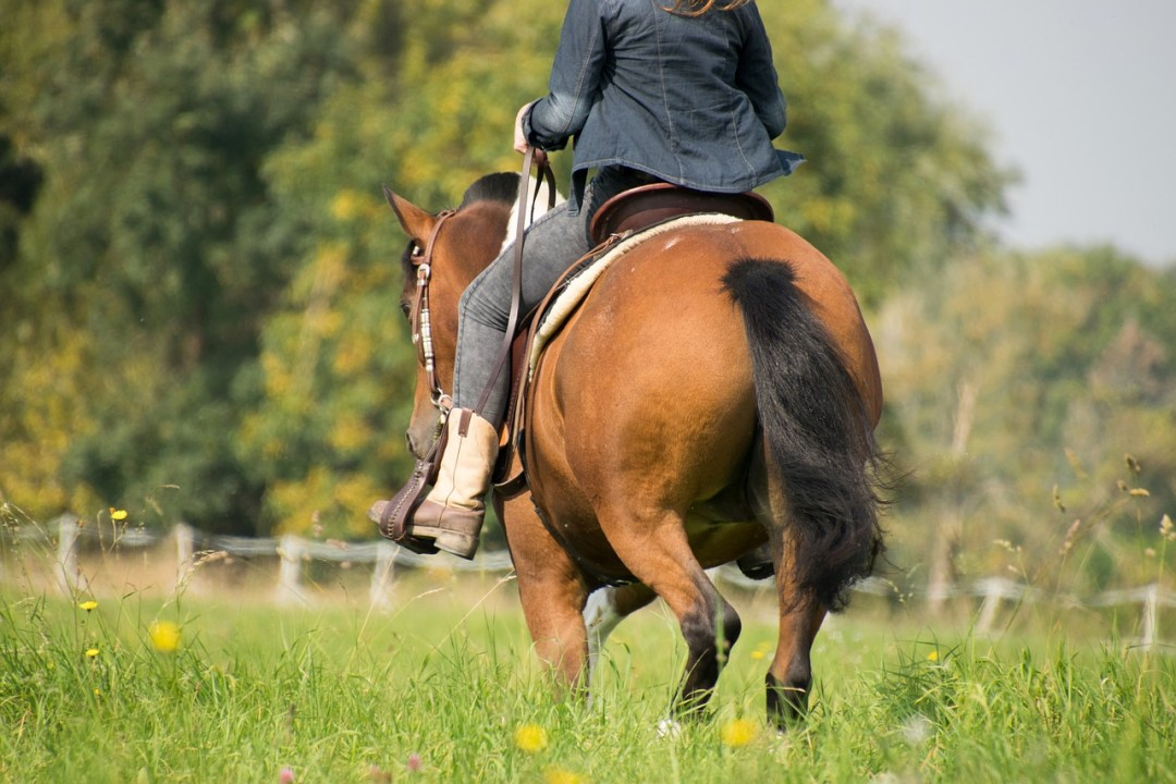 Natural Tick Spray for Horses