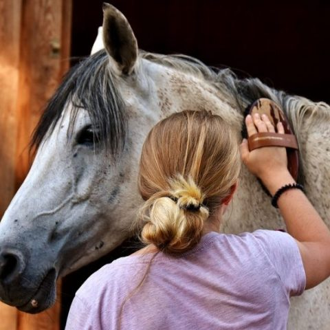 Natural Horse Brush Cleaner
