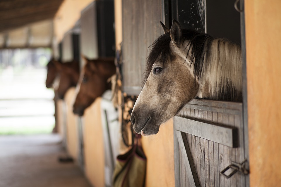Drop-In Horse Care: Set Yourself Up for Success