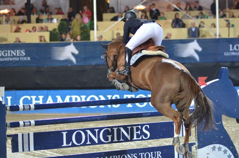 Zang Horse Breed Show Jumping