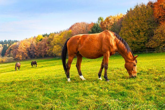 Horses in Autumn - 3 Important Fall Feeding Tips
