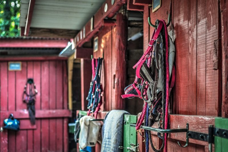 DIY Horse Stuff – Easy Recipes and Projects