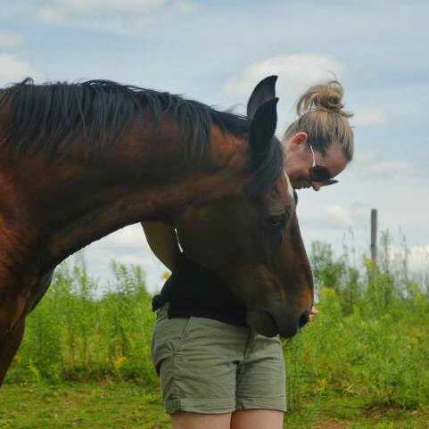 Barn chores checklist for keeping a horse on your property. Includes paddock footing, horse farm layout and horse care tips and tricks!