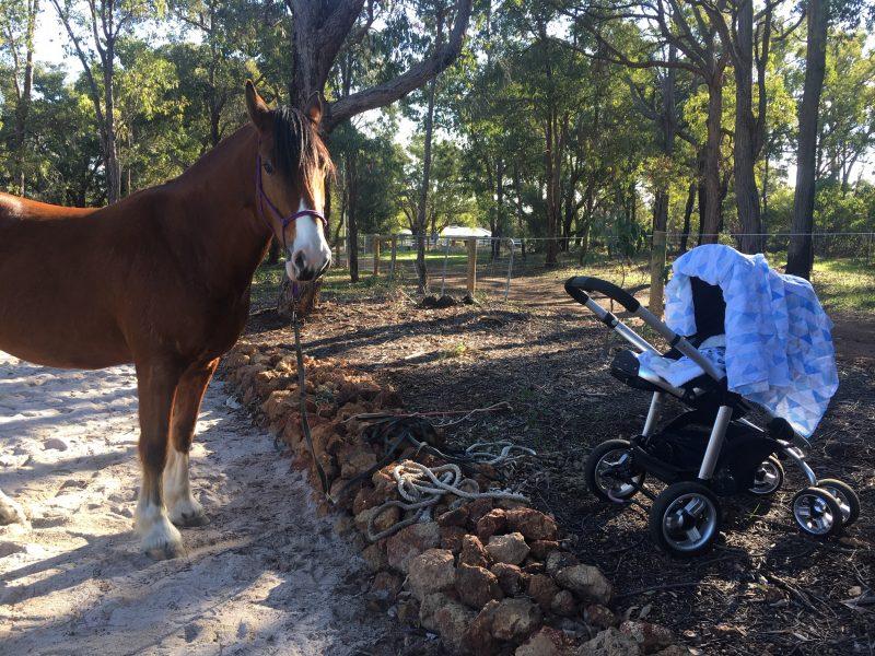 Horseback Riding After Babies