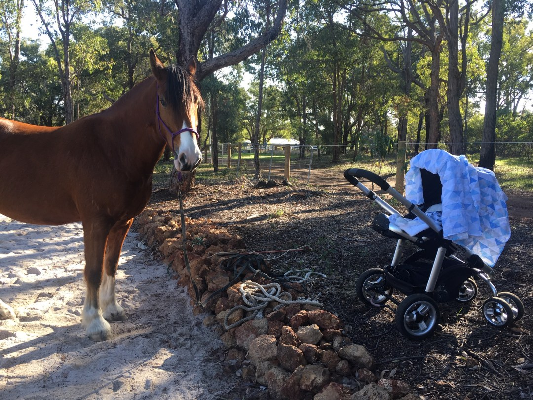 Horseback Riding After Babies