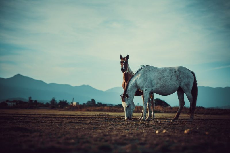 Buying Your First Horse? Make Sure You're Financially Prepared