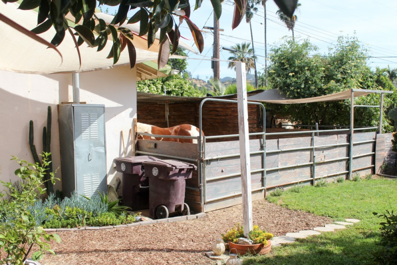 Tips for Keeping Your Horse in Your Backyard