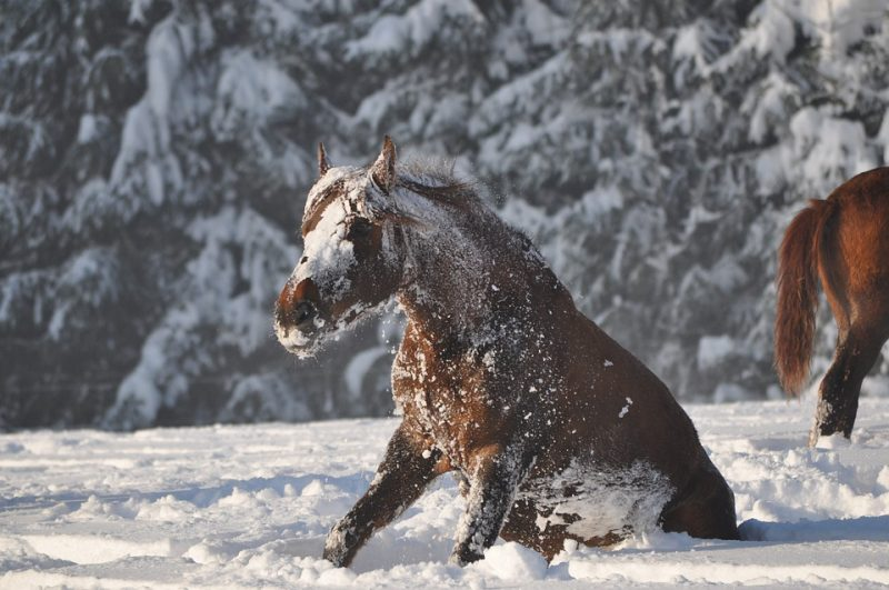 Horses in Winter – How to Groom a Long Winter Coat!