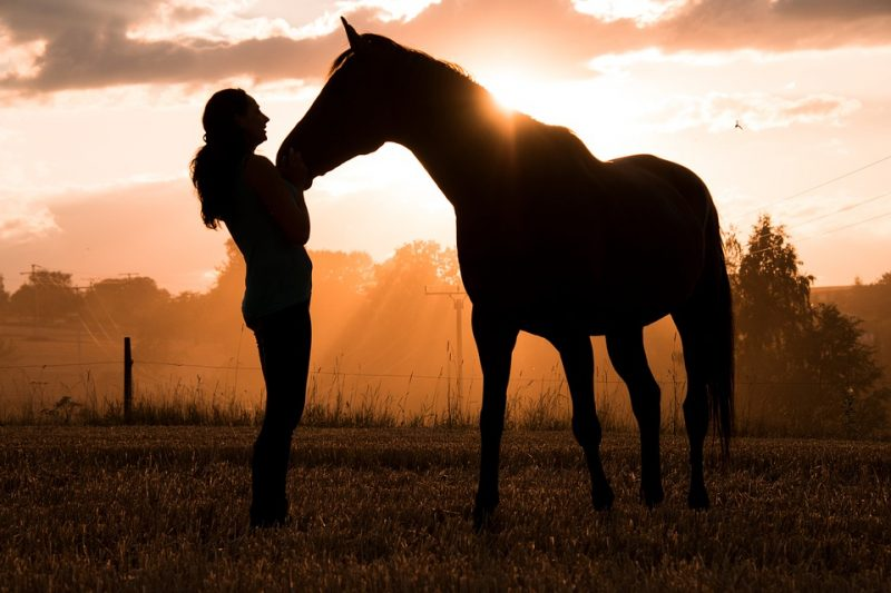 3 Exercises to Build Trust with Your Horse