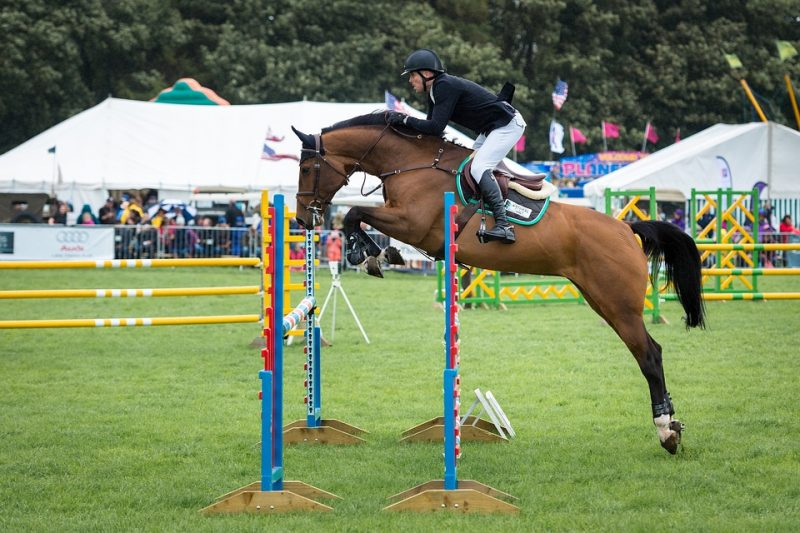 Best Horse Breeds for Jumping