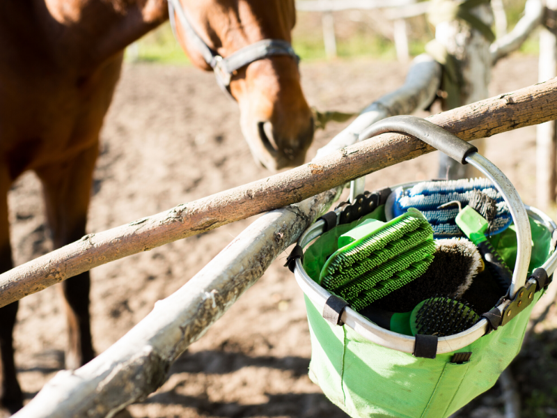 15 Minutes to Care for your Horse? Make Them Count!