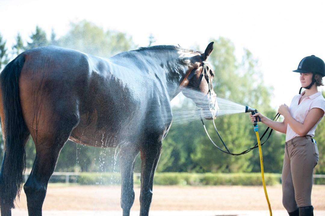 Helping Your Horses Beat the  Summer Heat