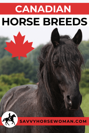 Canadian Horse Breeds