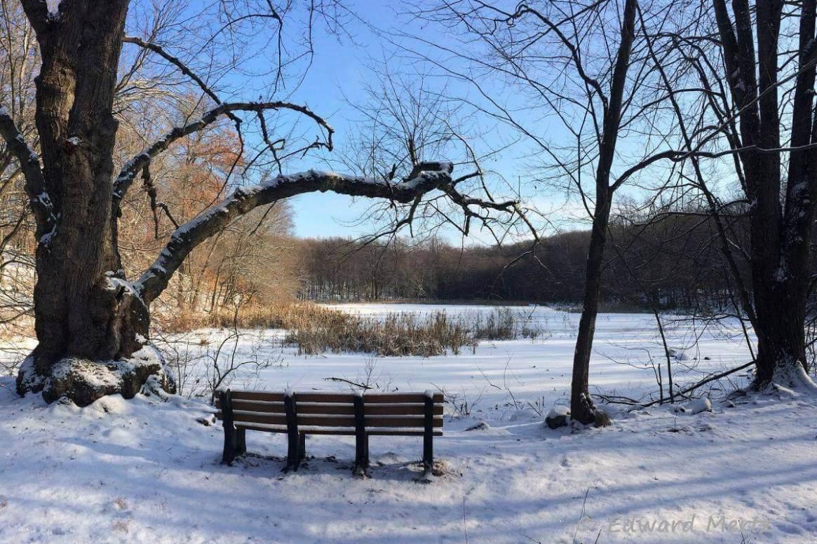 Brinton pond bench in winter. Photo: Edward Mertz