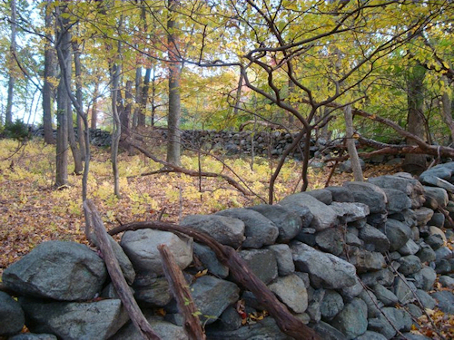 Stone walls from the 19th century and older are found throughout Choate Sanctuary's rolling landscape. Photo: SMRA/Anne Swaim
