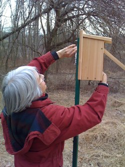 Audubon volunteers make a difference for birds, other wildlife and habitats. Photo: SMRAS/Anne Swaim.
