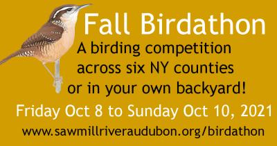 FB-ad-Birdathon-Fall-2021