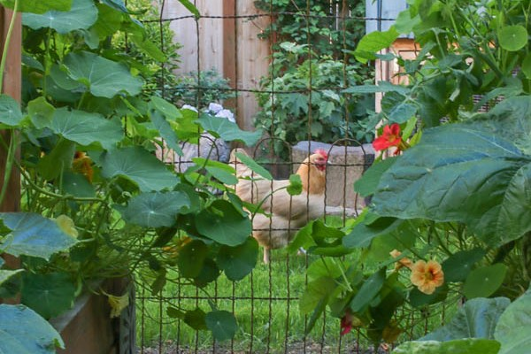 Vintage Wire Fence for the Garden