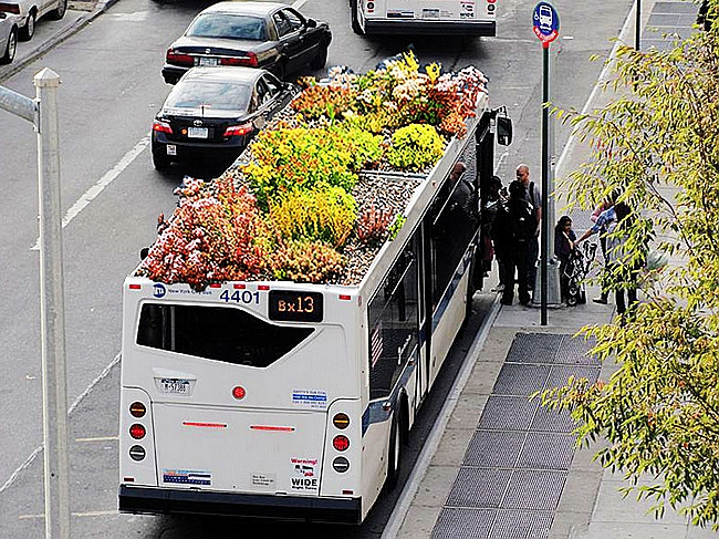 Green Roofed Bus (5)