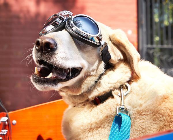 doggles2_grande.jpg