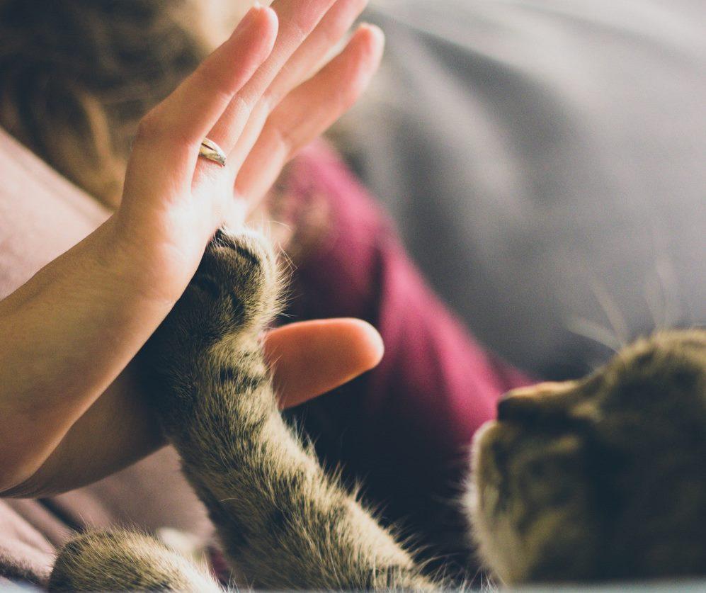 مرض خدش القطة يسبب أعراضاَ خطيرة