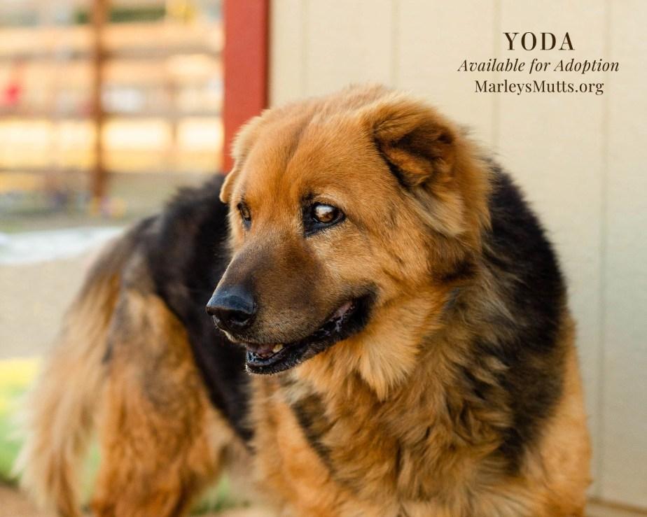 IMG_5021-1-Yoda-Profile-2048x1638