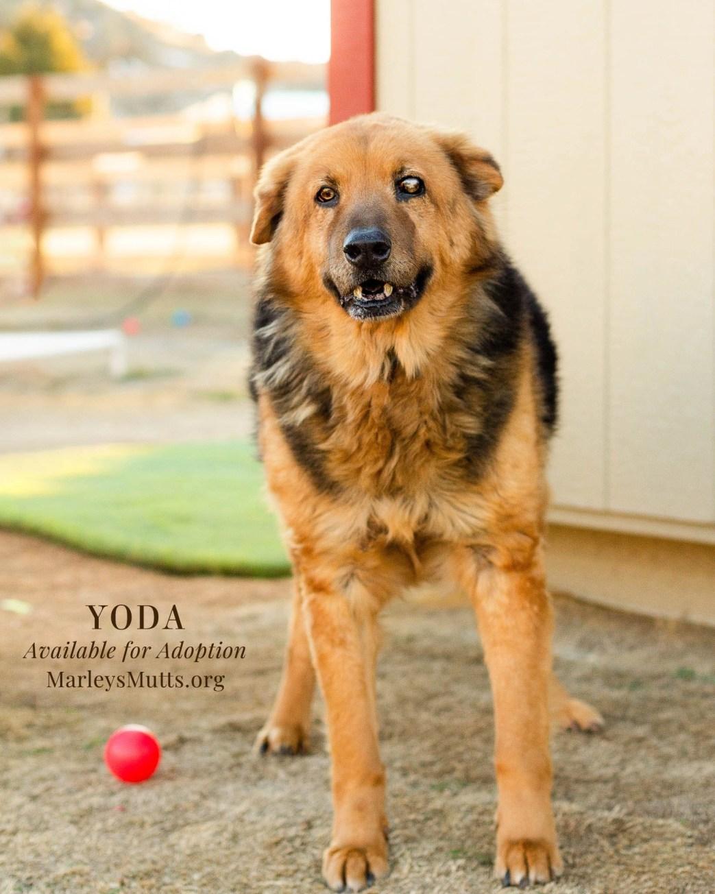 IMG_5029-2-Yoda-Front-1638x2048