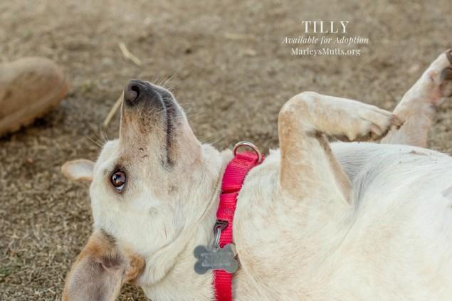 IMG_5123-Tilly-On-Back-2048x1365