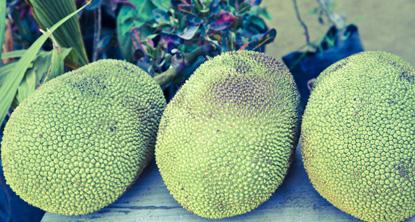 Can You Eat This? Jackfruit   Sayulita Beach
